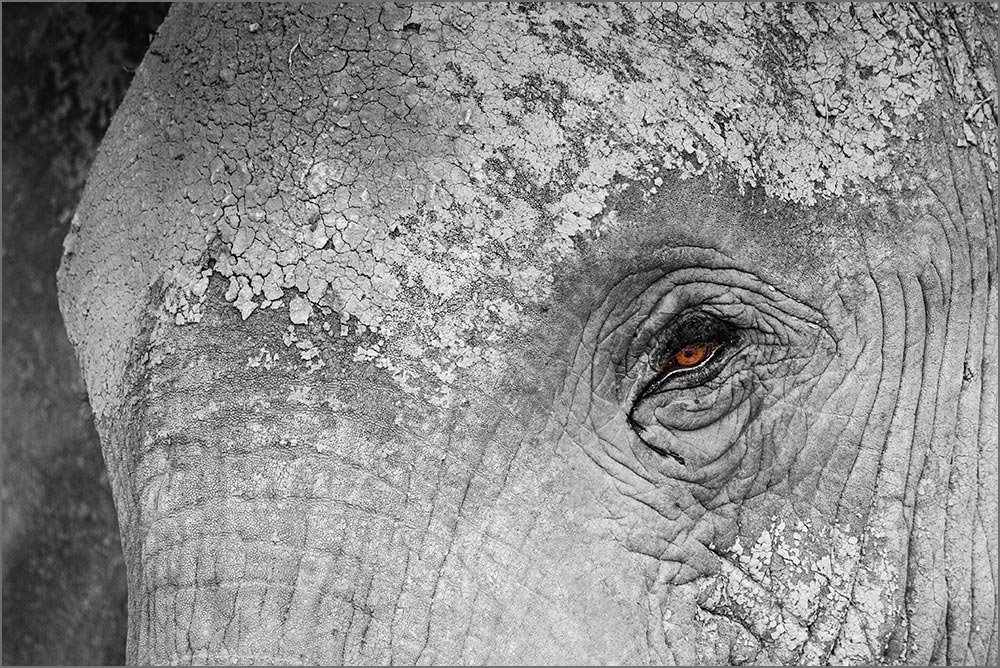 T002 Amboseli, Elefant / elephant