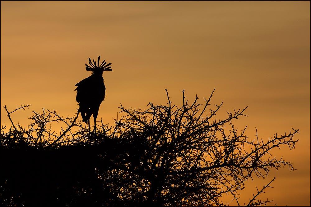 T083 Ndutu, Sekretär / secretary bird
