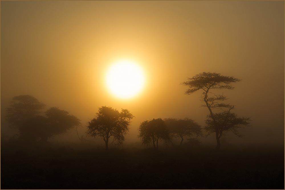 T084 Ndutu, Sonnenaufgang und Nebel / sunrise and fog
