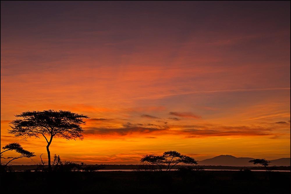 T081 Ndutu, Sonnenaufgang / sunrise