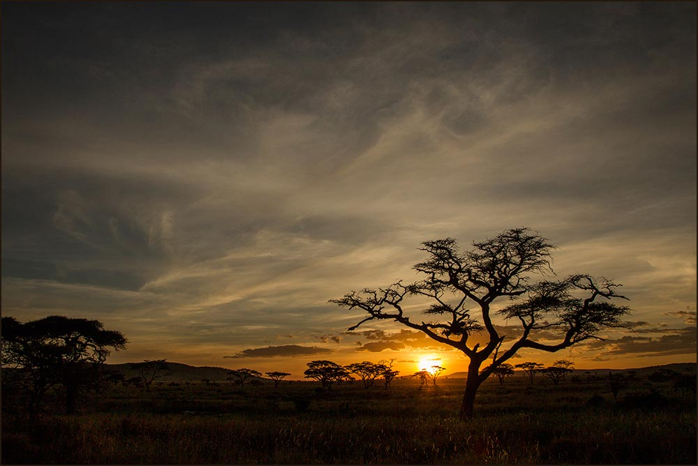 T135 Serengeti, Sonnenuntergang / sunset